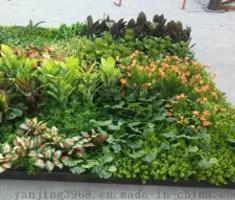 宁波妍景绿化墙